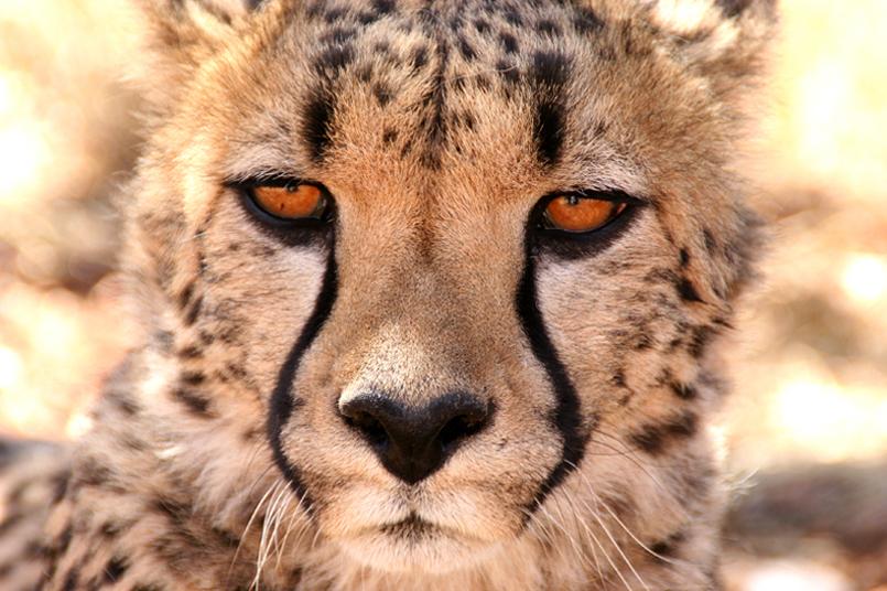 Tiere_Afrikas_Tanja_Stiebing_-_Fotografin-003