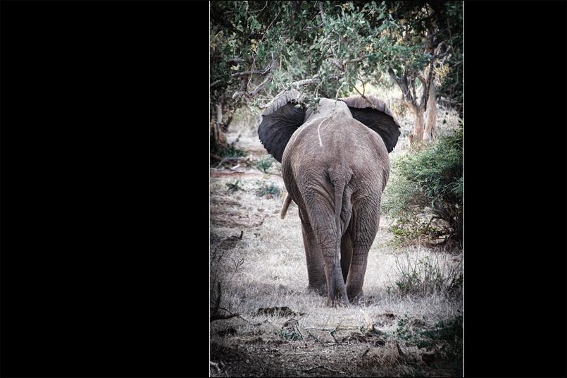 Tiere_Afrikas_Tanja_Stiebing_-_Fotografin-021