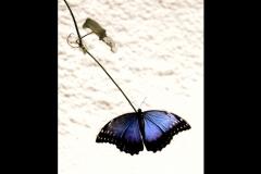 Natur_Tanja_Stiebing_-_Fotografin-008