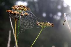 Natur_Tanja_Stiebing_-_Fotografin-054