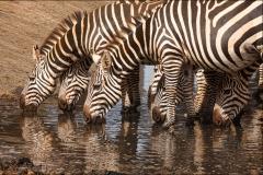 Tiere_Afrikas_Tanja_Stiebing_-_Fotografin-007