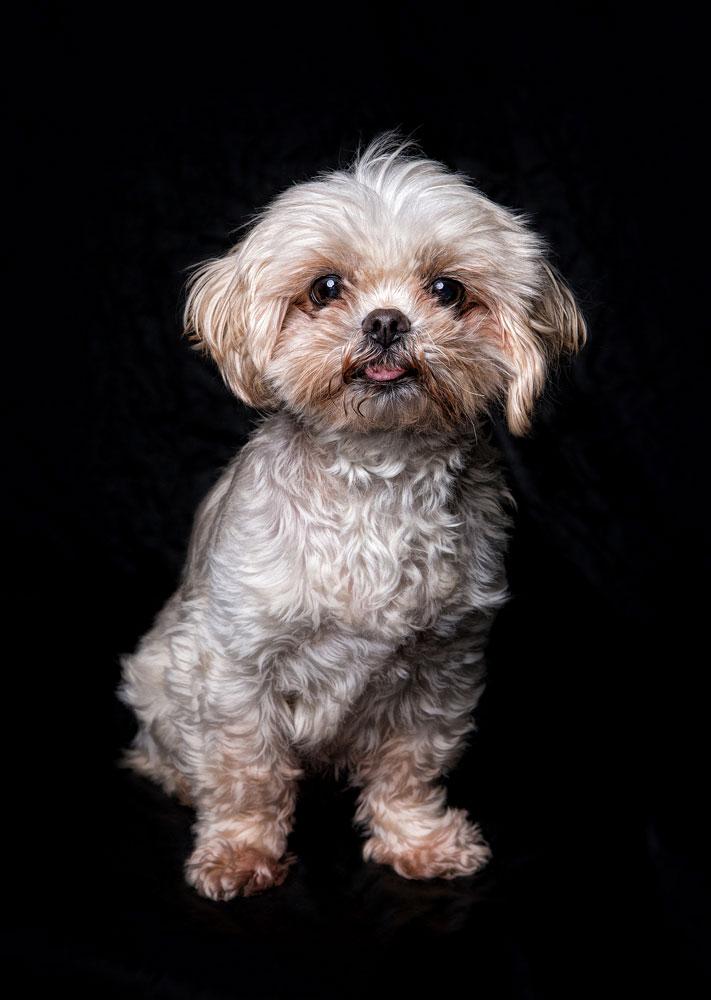 Tanja-Stiebing-Fotografin-Hunde-007