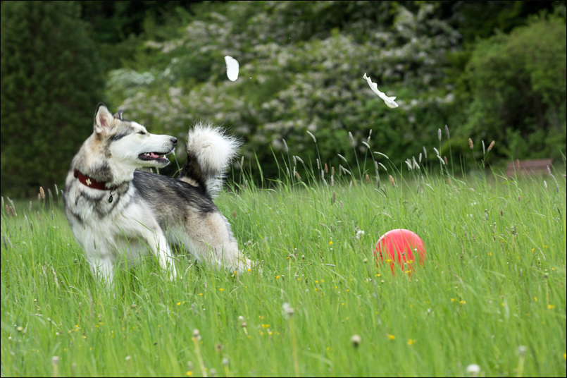 Tanja-Stiebing-Fotografin-Hunde-016