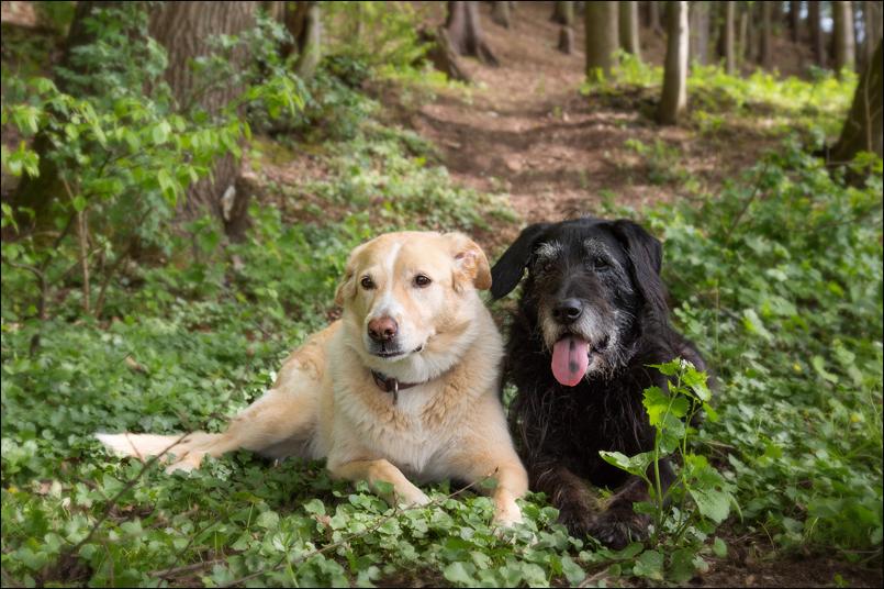 Tanja-Stiebing-Fotografin-Hunde-018
