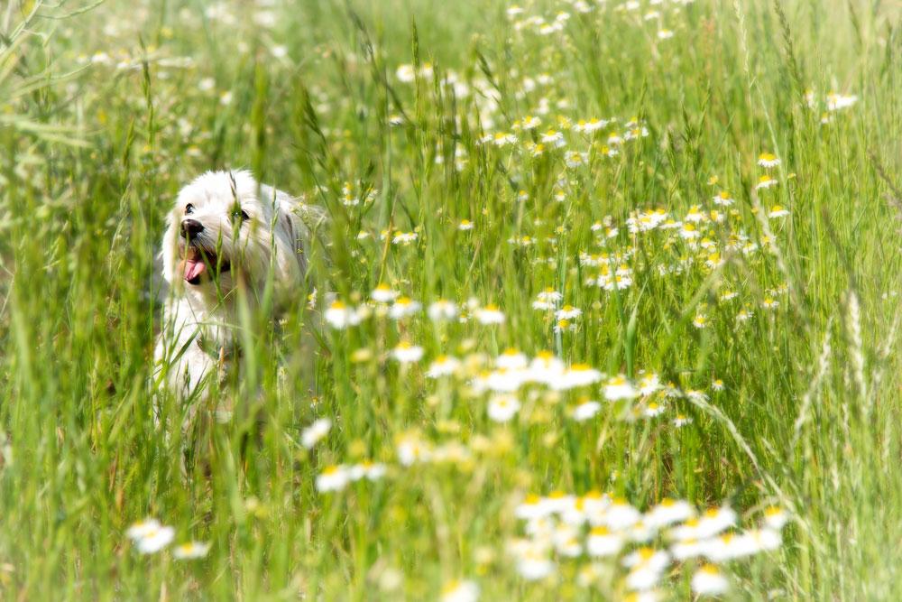 Tanja-Stiebing-Fotografin-Hunde-040