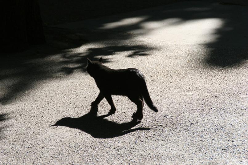 Tanja-Stiebing-Fotografin-Katzen-005