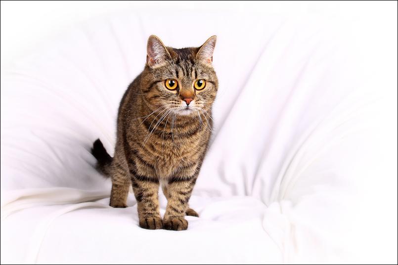 Tanja-Stiebing-Fotografin-Katzen-012