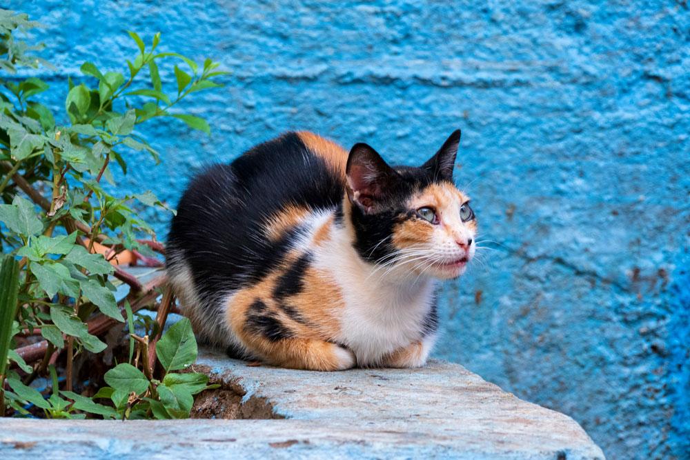 Tanja-Stiebing-Fotografin-Katzen-033