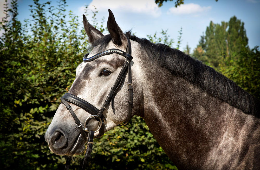 Tanja-Stiebing-Fotografin-Pferde-003