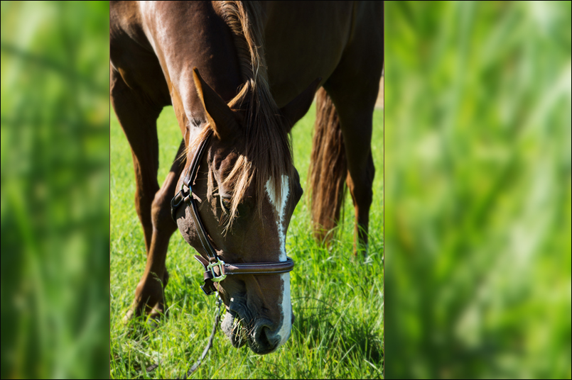Tanja-Stiebing-Fotografin-Pferde-012