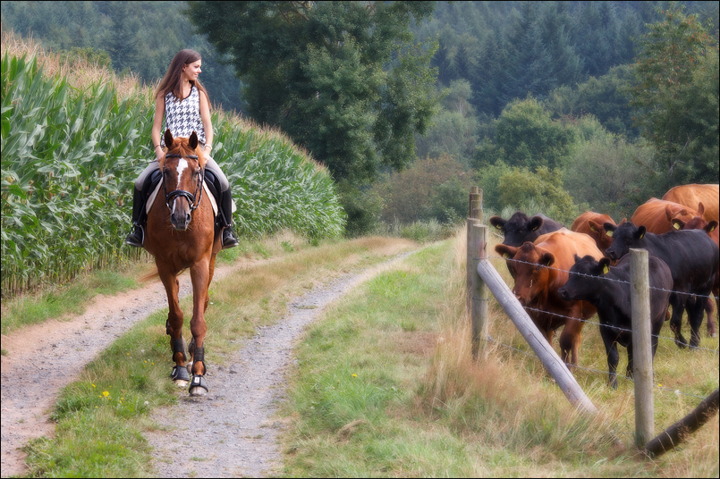 Tanja-Stiebing-Fotografin-Pferde-018