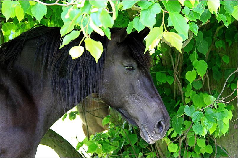 Tanja-Stiebing-Fotografin-Pferde-021