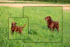 Tanja-Stiebing-Fotografin-Hunde-022