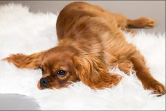Tanja-Stiebing-Fotografin-Hunde-024