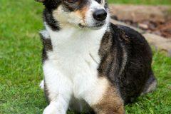 Tanja-Stiebing-Fotografin-Hunde-034