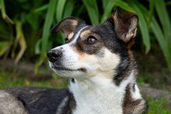 Tanja-Stiebing-Fotografin-Hunde-035