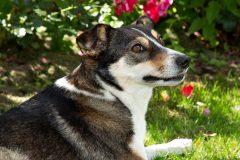 Tanja-Stiebing-Fotografin-Hunde-037