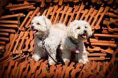 Tanja-Stiebing-Fotografin-Hunde-041