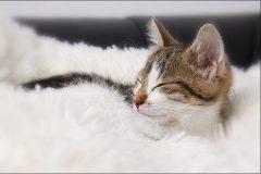 Tanja-Stiebing-Fotografin-Katzen-008