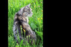 Tanja-Stiebing-Fotografin-Katzen-021