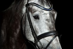 Tanja-Stiebing-Fotografin-Pferde-001
