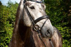 Tanja-Stiebing-Fotografin-Pferde-005