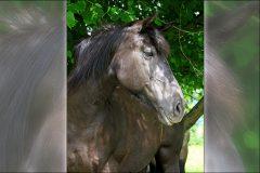 Tanja-Stiebing-Fotografin-Pferde-008