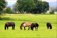 Tanja-Stiebing-Fotografin-Pferde-017